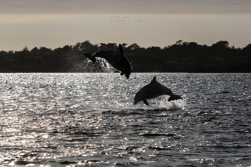 Dolphins at home