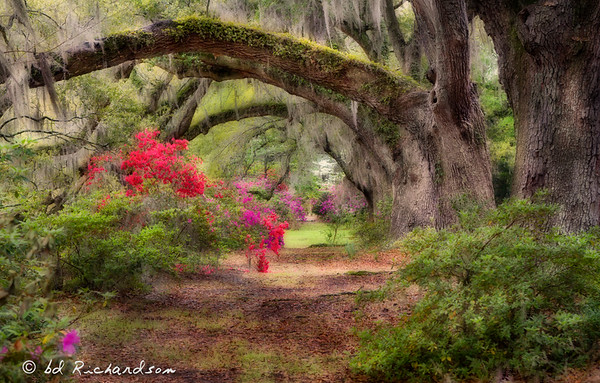 The Iconic Charleston Garden