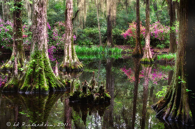 Enchanted Swamp