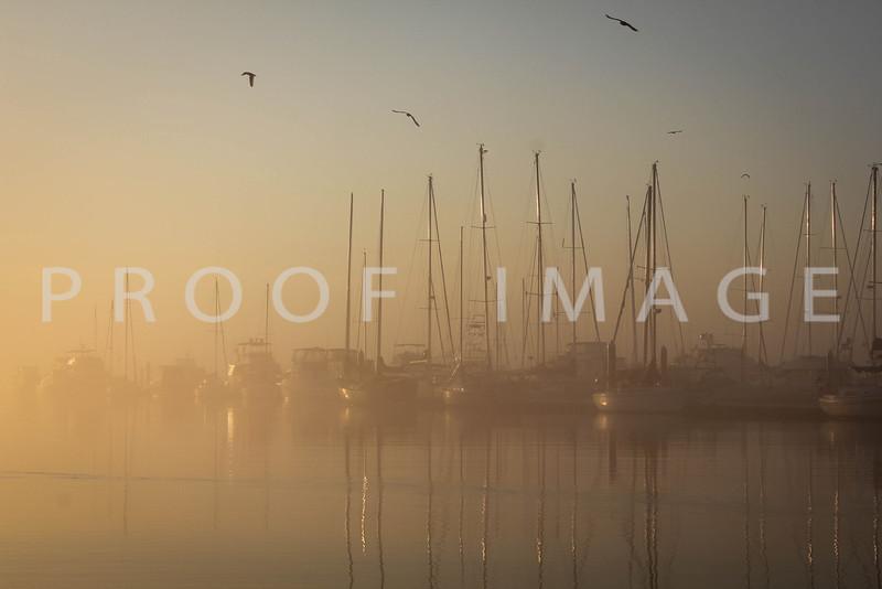 City Marina with Gulls
