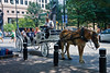 Horse and Buggy Rides in Uptown Charlotte
