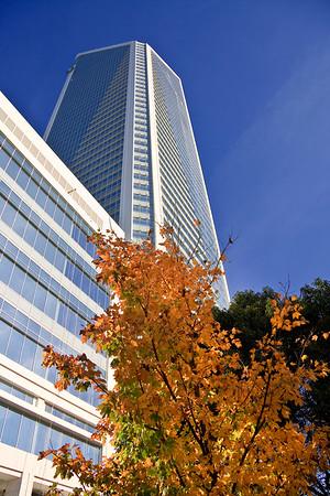 Duke Energy Tower in the Fall