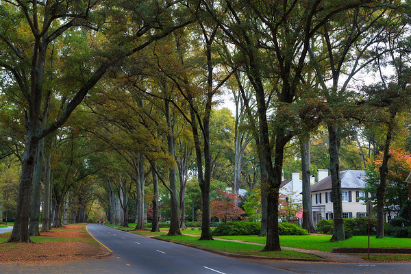 Queens Road West in Charlotte during the Fall