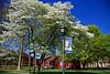 Queens University Campus