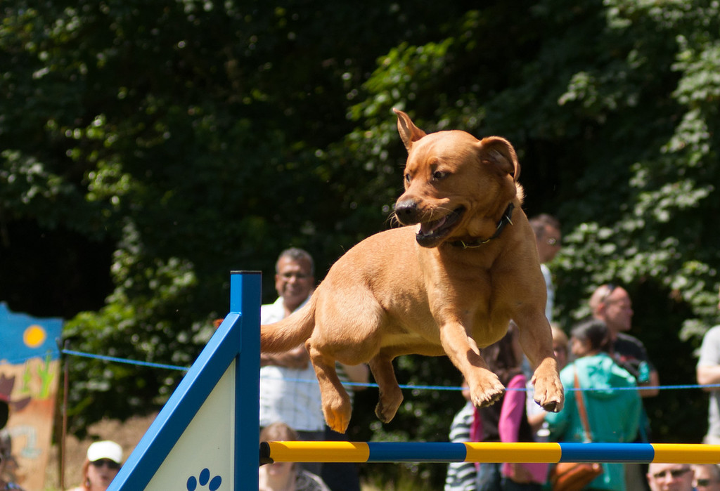 Dog_Show_32
