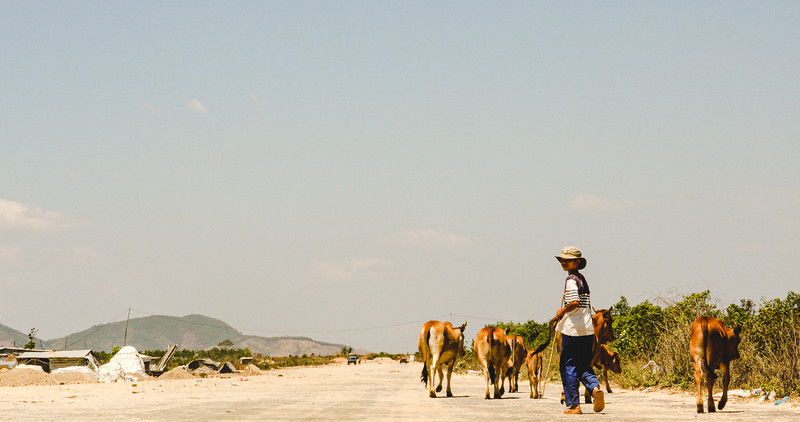 Boy with Cows on Runway