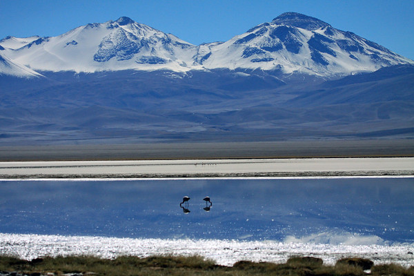 Couple of Andean Flamingos feeding in Laguna Santa Rosa, with another small group preening beyond - to the distal Tres Cruces Central and Sur - of which Tres Crues Sur (on R), is the 5th highest peak in South America, rising to about 22,139 ft. ( 6,748 m) - whose summit forms the country borders, from here in Atacama (region) of Chile, with the northwestern Catamarca (province) in Argentina