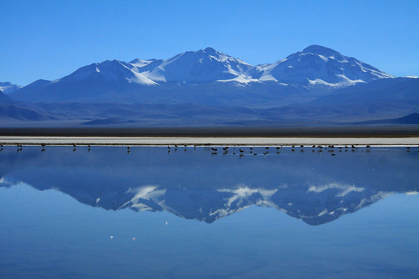 Reflection of Nevado Tres Cruces (Snowy Three Crosses) - with Tres Cruces Norte, Central, and Sur - and the Andean Flamingos and Andean Crested Ducks in Laguna Santa Rosa - Atacama (region).