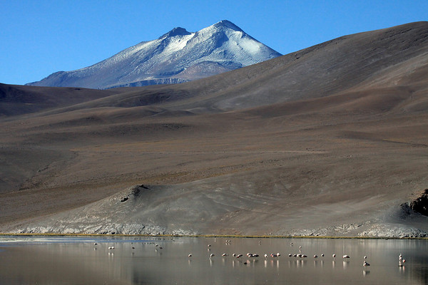 Andean Flamingos and Andean Crested Ducks - upon Laguna Santa Rosa, an endorheic lagoon situated at about 12,140 ft. (3,700 m) - here viewing southeast, about 15 mi. (22 km), across the altiplano terrain - to Volcan Copiapó (also called Cerro Azufre), rising to 19,856 ft. (6,052 m) - which is at the southern end of the Central Volcanic Zone of the Andes - just south of its widest section, of the longest exposed mountain range on Earth, that stretches about 5,500 mi. (8,850 km).