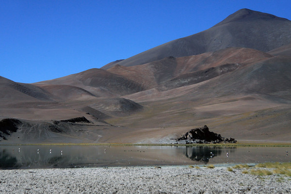 From the salt encrusted and tussock grass shoreline - to the flamingos and ducks feeding upon Laguna Santa Rosa - up to the peak of Cerro Pastillitos.