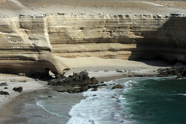 Wave breaking among the sandstone arch supported by an volcanic rock base - with the Whimbrels, Peruvian gulls, Gray Gulls, and Turkey Buzzards sharing the shoreline, while the Peruvian Booby perch along the ledges above - Bahia Moreno - Antofagasta region.