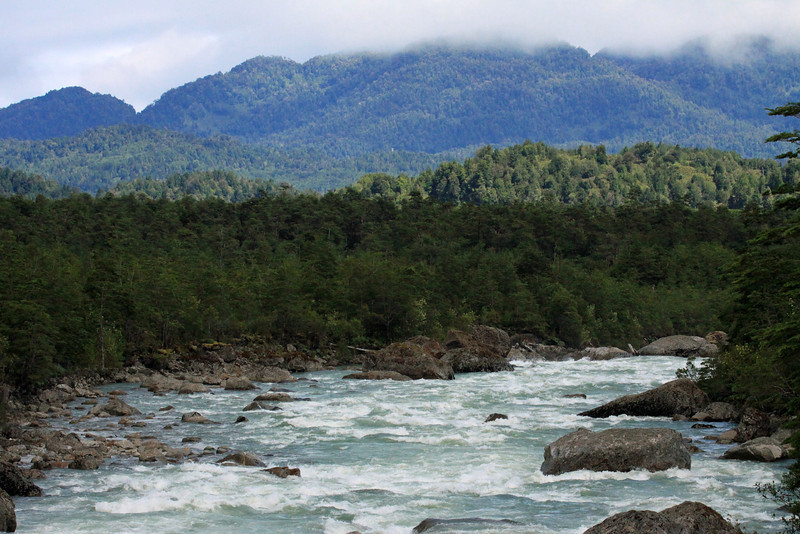 Glacial milk water flowing among the igneous rock boulders, from below Laguna Tempanos to the Seno Ventisquero - to the clouded and sunlit virgin forest, of the Valdivian Temperate Rainforest ecoregion - Queulat National Park, Ventisquero section.