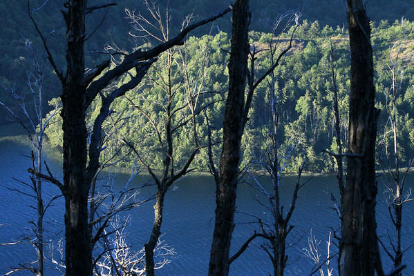 Beyond the sunlit and shadowed dead trunks, limbs, and branches - down to the sunlit water, lined with spike sedges, of Laguna Malleco - and surrounded by steep forested slopes.