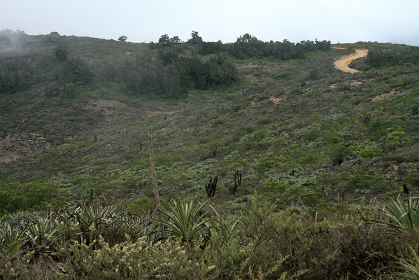 Bosque Fray Jorge National Park - the camino along the upper ridge of the Cordillera Talinay, also know as, Altos de Talinay - this is the transitional area between the two ecoregions of the Matorral and Valdivian (a relict forest habitat).