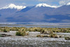 From the tussock grass (Festuca orthophylla) along the shoreline of an endorheic lagoon at the Salar Ascotan - to the partially cloud-shadowed slopes and sunlit peak of Cerros Cañapa.