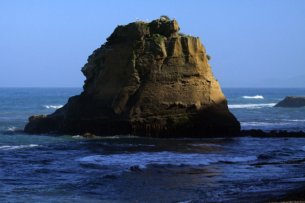 Morning sunlight upon the kelp, visible during the ebb tide (receding), upon the sea stack - with the Kelp Gulls above, and a distal sea stack, along the western coastline of Chiloé Island