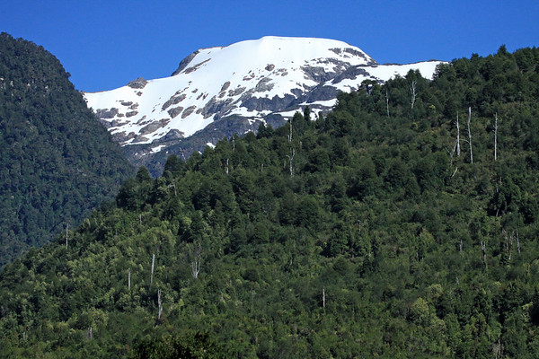 Corcovado National Park (2005) - centered about 43° 25' S - Palena province, the southern area of the Los Lagos region - this is the Valdavian Temperate Forest ecoregion, of predominately southern beech trees - this is also the Northern Patagonia Batholith (which extends from about 39°- 47°S), along the Patagonia Andes - and the Southern Volcanic Zone (which extends 33°- 46° S) - the Austral Zone of southern Chile, characterized by fjords, ice fields, virgin forests, and glacial sculpted intrusive igneous rock.