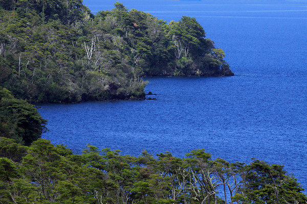Southern beech trees along the rocky shoreline at Punta Lavas - eastern shoreline of Lago Llanquihue - Los Lagos region.