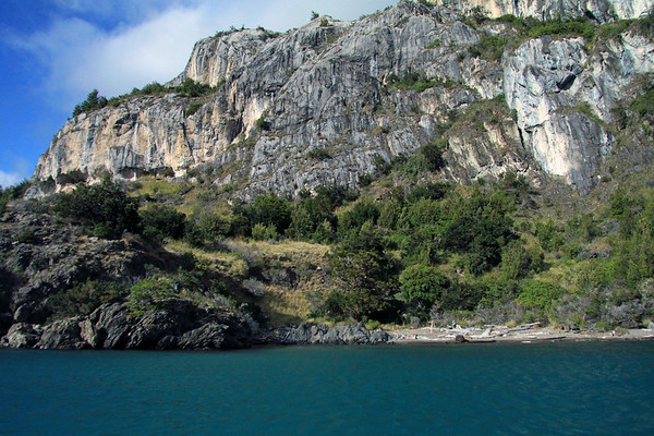 Fallen southern beech trees, washed upon the western shore of Lago Carrera - with the thriving southern beech trees, shrubs, and tussock grass among the marble cliffs and shoreline.