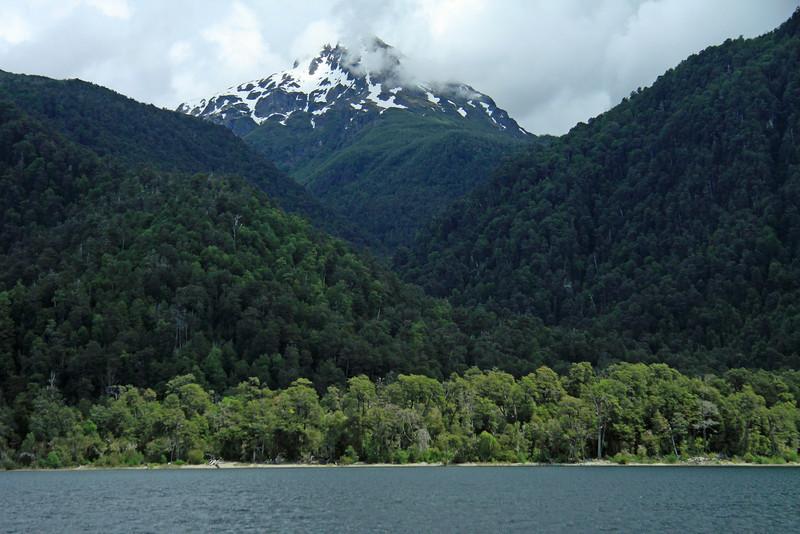 Lago Pirehueico - southern beech trees - Cerro Encanto.