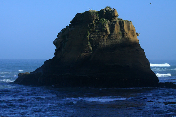 Morning sunlight upon the sea stack, along the Bahia Cucao - with the Kelp Gulls above and upon.
