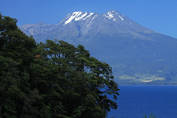 Beyond the beech trees along the slope at Punta Lavas - across Lago Llanquihue - to the glacial-capped Volcan Calbuco