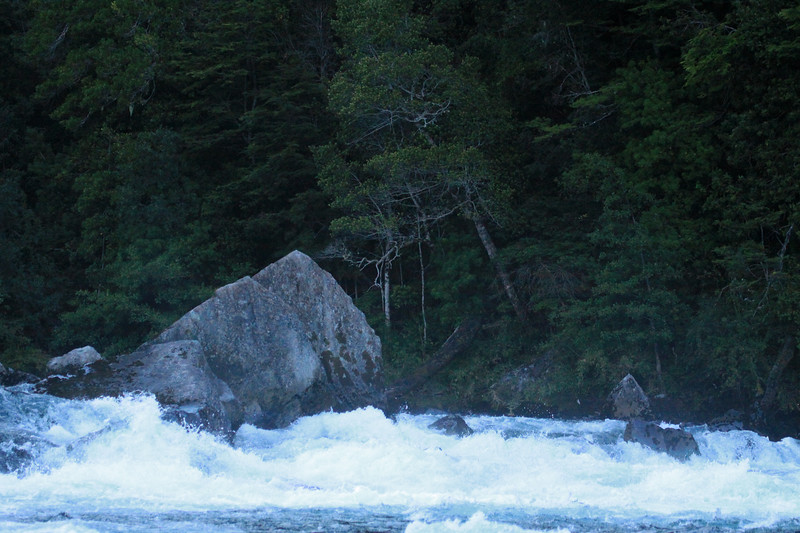 Early morning shadowed rapids, of the Rio Petrohue -  among the igneous rock boulders, and Valdivian vegetation.