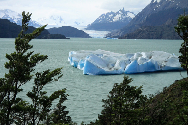 Beyond the beech trees, and icebergs upon Lago Grey - to Nunatak (l) and the lower slope of Cerro Ostrava (r), and between is the terminus snout of the Grey Glacier - then distal to Cerro Punzon and Cerro Piramide.