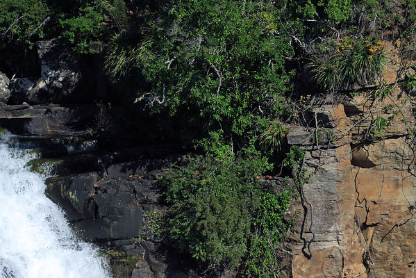 Along the volcanic rock ledge and crest of Malleco Falls.