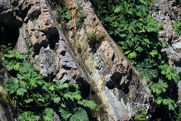 Nalca - along with other ferns, tussock grass, and shrubs - growing along the steep rock slope, of the Patagonia Andes.