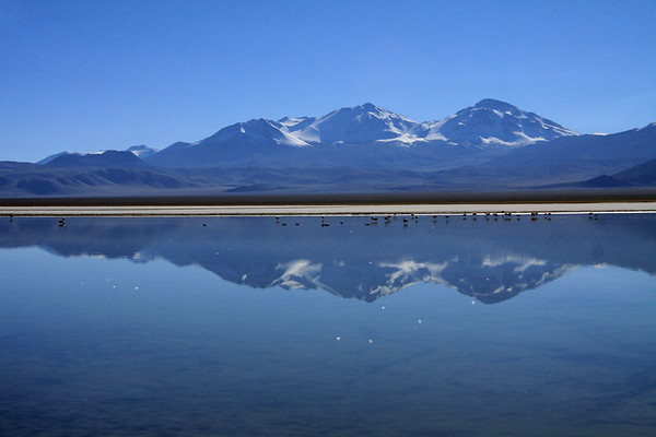 Morning reflection of the flamingos, Nevado Tres Cruces, and the distal Cerro Barrancas Blancas (l) - upon the calm waters of Laguna Santa Rosa, the southern end of the endorheic Salar Maricunga (the southern most Clilean endorheic salt flat).