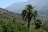 Chilean Wine Palms - to the southern ridge of Cerro Campana.