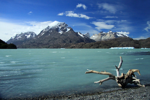 Southern beech drift wood along the rocky shoreline and a blocky iceberg along the peninsula, at the southern end of Lago Grey - to Cerro Cathedral (l) - Cerro Paine Grande (c) - and distal (l) to Fortaleza, Espada, Hoja, Cuernos del Paine, and Mt. Almirante Nieto - Torres del Paine National Park - Magellanes region - Austral Zone (fjords, ice fields, and the Andes Mountains).