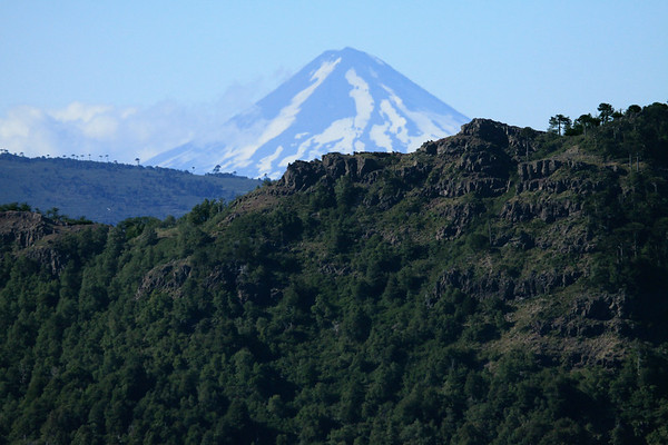 Beyond the Monkey Puzzle trees, along the ridge of the Sierra de las Thermas - to the distal conical and glacial peak, of Volcan Llaima, a symmetrical stratovolcano rising to about 10,253 ft. (3,125 m) among the Patagonia Andes.
