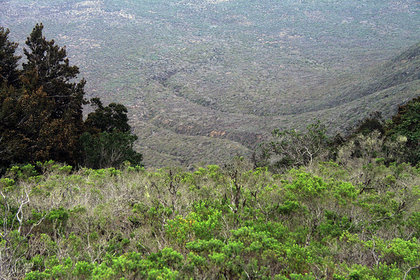 Across the mid-summer season scrub vegetation, past the trees, and along the weather eroded ravines, of the lower western slope of the Cordillera Talinay.