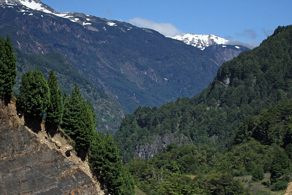 Rio Simpson National Reserve - viewing westward, across the southern beech trees of the Magellanic Subpolar Forest ecoregion - down into the glacial sculpted valley - and up to the glacial ice slopes, of the Patagonia Andes - about 45° 30' S and 72° 20' W - the early summer season.