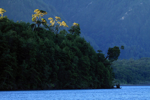 Days's last rays upon the Coihue or Common Beech (Nothofagus dombeyi) - along the peninsula and shoreline, of the glacial formed, Lake All Saints.