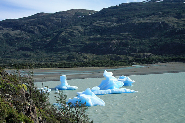 Along the rocky peninsula, lined with cushion plants, Notro (Chilean Firebush), and beech trees - down to the glacial ice along the southern shoreline of Lago Grey - with the Rio Grey beyond, and the Magellanic Subpolar Forest ecoregion slopes of Cerro Ferrier above - Torres del Paine National Park - Magellanes region.