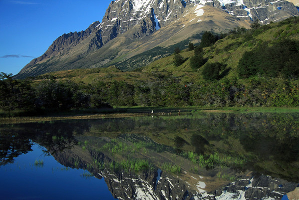 Reflection upon the placid water of a glacial formed lagoon, with aquatic grass - of the eastern slope of Mt. Almirante Nieto, displaying southern beech trees, shrubs, cushion plants, and grassland - with a pair of Magellan Goose with their brood of 7, and several other aquatic foul species along the distal shore.