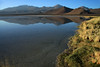 From the cushion plant and tussock grass - to the early morning reflection upon the placid water of an endorheic lagoon, of Cerro Polapi (distal, l), Cerro Cebollar (c), and Cerro Cuevas (r) - with the lower foothills of Cerro Palpana (foreground, r) - among the foraging flamingos and pair of Andean Avocet - Alto Loa National Reserve - northern Antofagasta region.