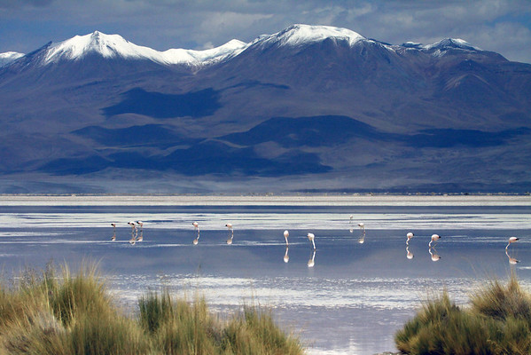 Beyond the tussock grass and foraging flamingos, upon the salt flat of Salar Ascotan, in the Alto Loa National Reserve, Antofagasta region, Chile - up to the partially cloud-shaded western slopes and southern end of Cerros Cañapa, located in the Potosi department of southwestern Bolivia.