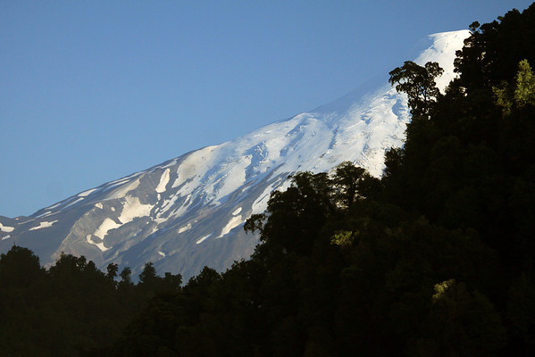 Beyond the southern beech tree tops - to a southern view of the glacial peak and igneous rock slope, of Volcan Osorno.