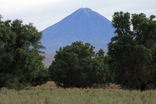 From the xeric vegetation of the Central Andean Dry Puna ecoregion - up to Volcan Licancabur - the southwestern most boundary of Bolivia, with here in the Antofagasta region of Chile.