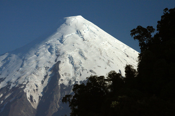 Morning light upon the southern igneous rock slope, and glacial ice cap peak, of Volcan Osorno - from beyond the mostly shaded, upper limbs and branches of the southern beech trees.