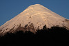 Beyond the silhouette of southern beech trees - to the morning sunlight upon the conical and glacial ice peak, of Volcan Osorno.