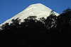 Beyond the early morning silhouette of the southern beech tree tops - to the southeastern slope and glacial ice peak, of Volcan Osorno.