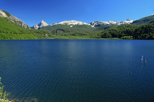 Lago Torres - viewing southward across the glacial formed lake, surrounded by southern beech tress of the Magellanic Subpolar Forest.