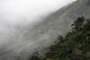 Across the forested windward slope, of the Cordillera Talinay - among the Camanchaca coastal fog.