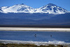 Beyond the Laguna Santa Rosa, and feeding flamingos - up the western slopes, to Cerro Tres Cruces Central (l) and Cerro Tres Cruces Sur (r).