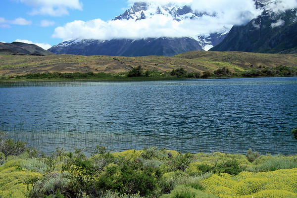 Beyond the Patagonia Steppe ecoregion vegetation, here displaying blooming cushion plants and shrubs - to the aquatic spike sedge along the endorheic  lagoon, with a few southern beech trees along the distal shoreline - then beyond the stratus cloud, to the lower slope of Cerro Paine Grande (l) and lower slope of Cuerno Principal (r) - between the mouth of the Valle Frances - Torres del Paine National Park.